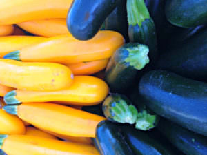 Squash Zucchini. Photo credit Lynne Goldman