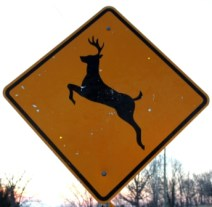 Deer crossing signs are becoming much more common in cities and suburban areas. Photo by Josh Honeycutt