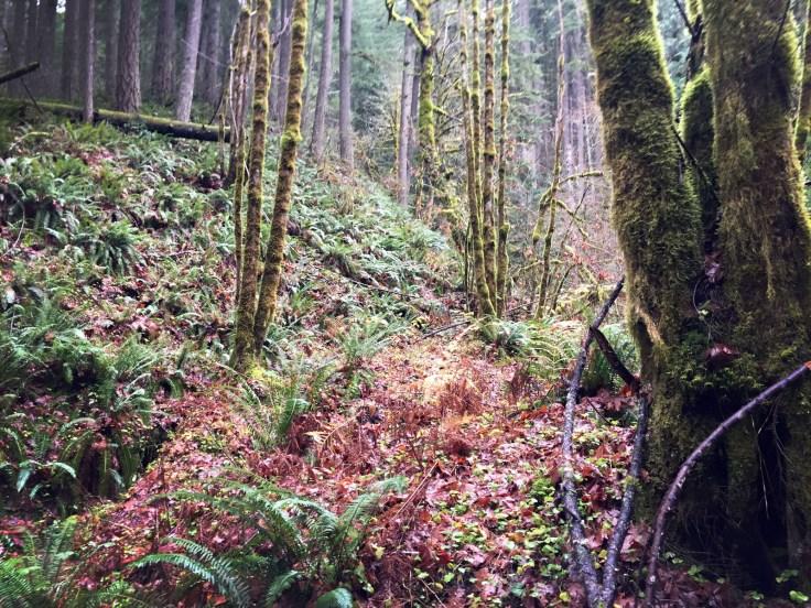 winter_creek_18