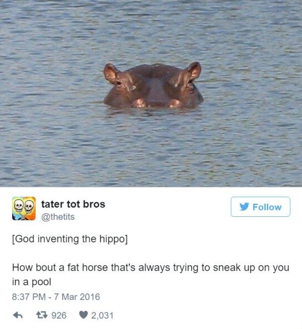 Dios creando animales, practica ingles a base de tweet (18)