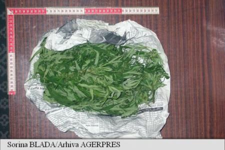 Cat mai costa doza de canabis in Bucuresti? 60 de lei, spune DIICOT!