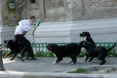 Cum vrea primaria sa scape Bucurestiul de maidanezi: Infiinteaza Politia Animalelor, angajeaza hingheri si deschide un cimitir pentru caini!