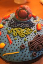 Cell Cake 4