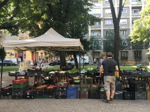 Stumbled across a farmer's market on the way home from the hospital one day
