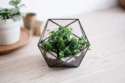 """Стеклянный террариум для растений от студии """"boxwood"""""""