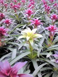 植物のアルビノ3