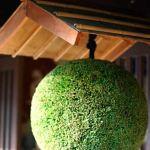 酒屋 の軒下にある丸い玉は杉玉!杉玉を飾る理由や意味は?居酒屋にも