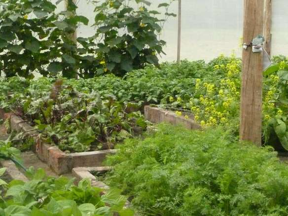 Our garden right now is popping with enzyme, nutrient dense food. Organic raw vegetables, fruits, seeds, and nuts contain a huge amount of living enzymes... try to eat 60% of your food raw