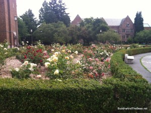 Rose garden - University of Washington.