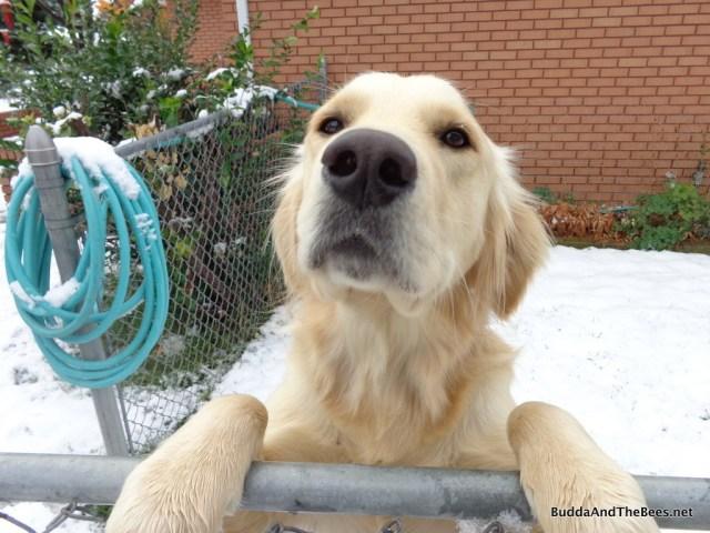 Our neighbor's dog, Tucker.
