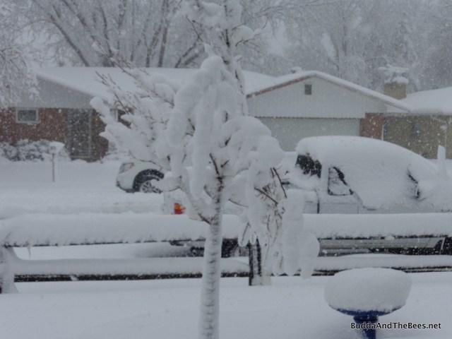 Poor little linden tree drowing in snow