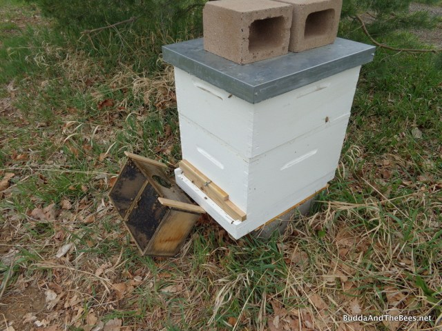 Package box left so bees can crawl into the hive