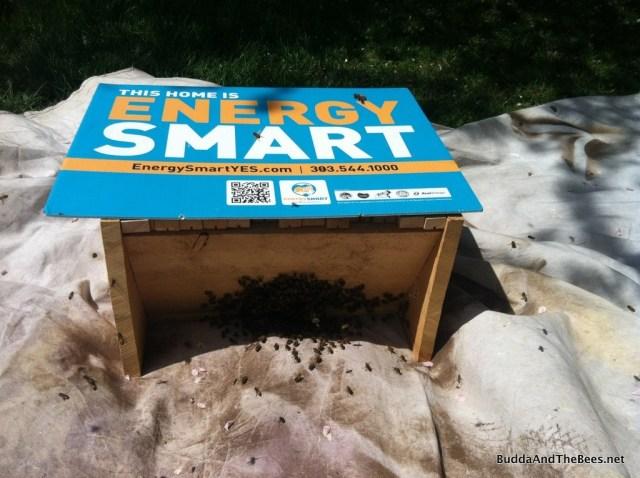 The Energy Smart Beehive