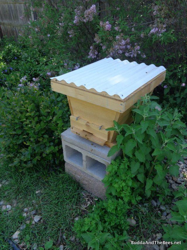 Mini hive holding swarm in Laura's yard