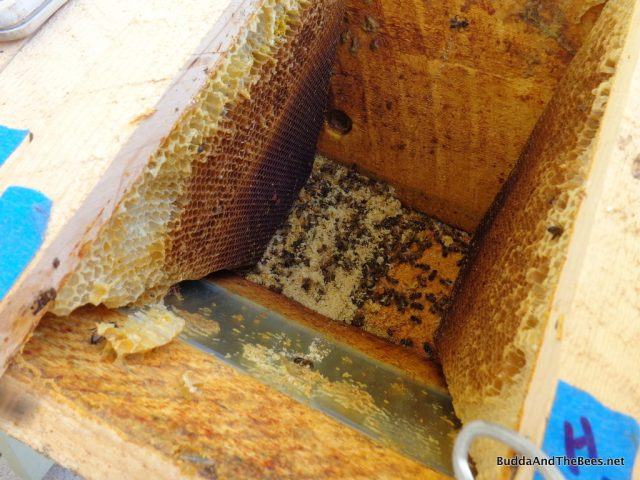 Dead bees and shredded comb at the bottom of the hive