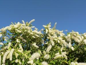 Summer Floral Beauty
