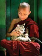 patient kitteh