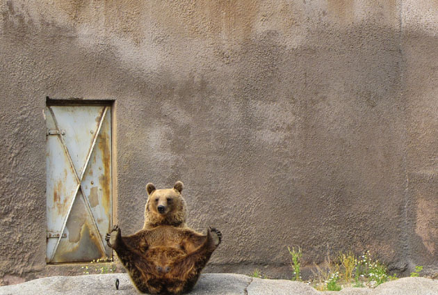 These Animals trying Yoga is the Funniest Thing Bear