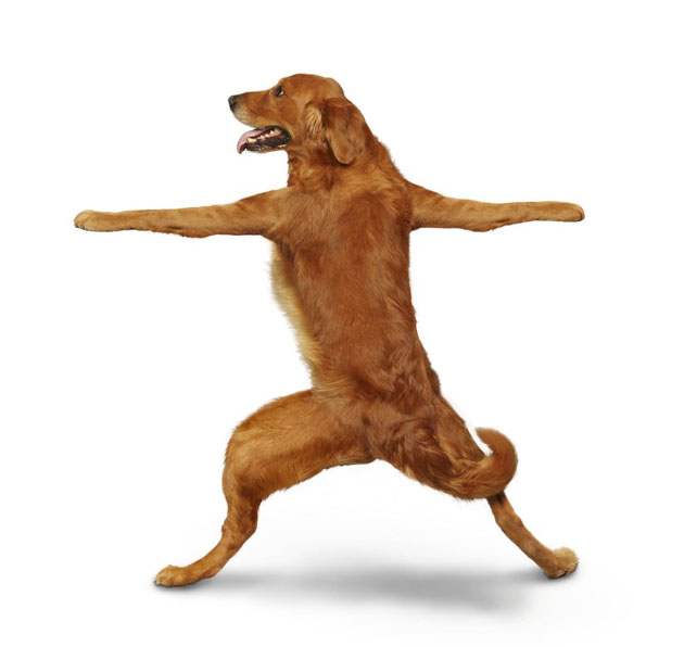 These Animals trying Yoga is the Funniest Thing Dog