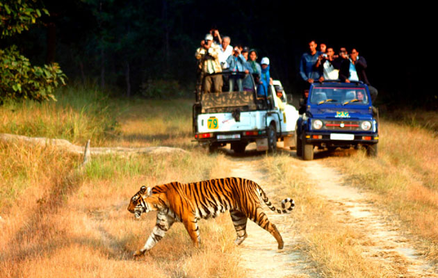 Jim Corbett National Park - 10 Best Indian Places To Visit During Winter