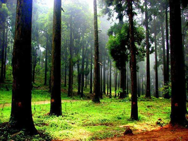 Dow Hill, Kurseong West Bengal Top 10 Most Haunted Places of India
