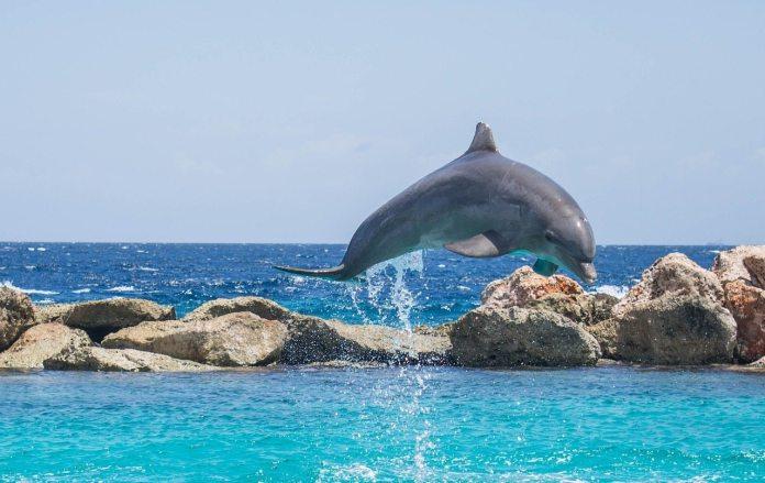 dolphin-906182_1280