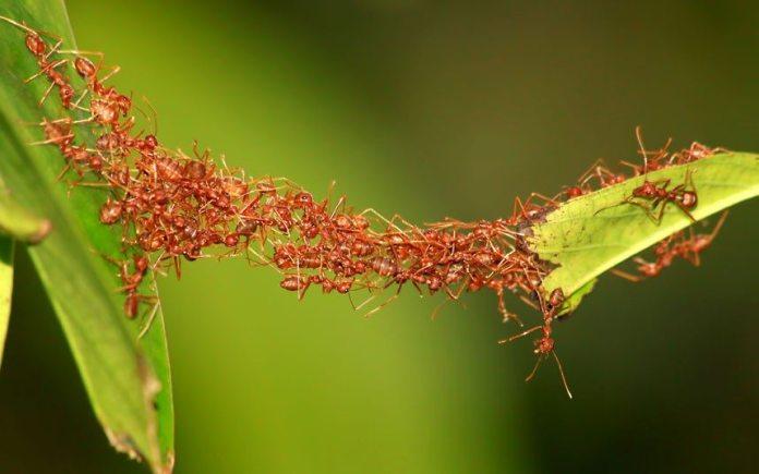 ants motivation