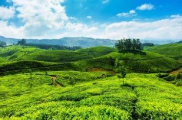 wayanad-spice-plantations