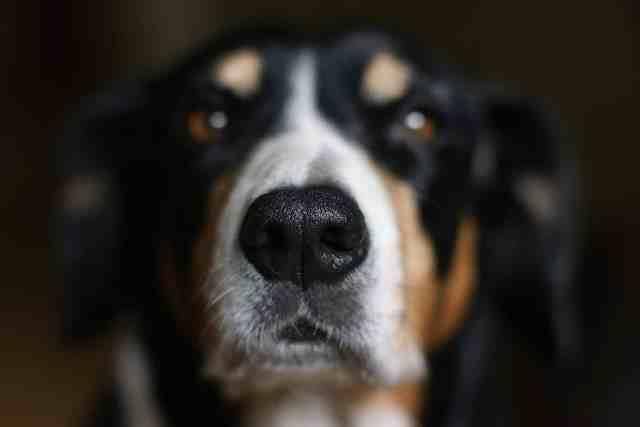 Hundsporten Nose Work
