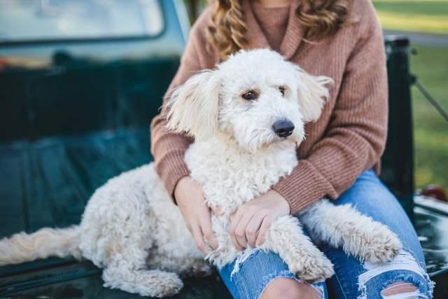 Nyårslöften för hundägare
