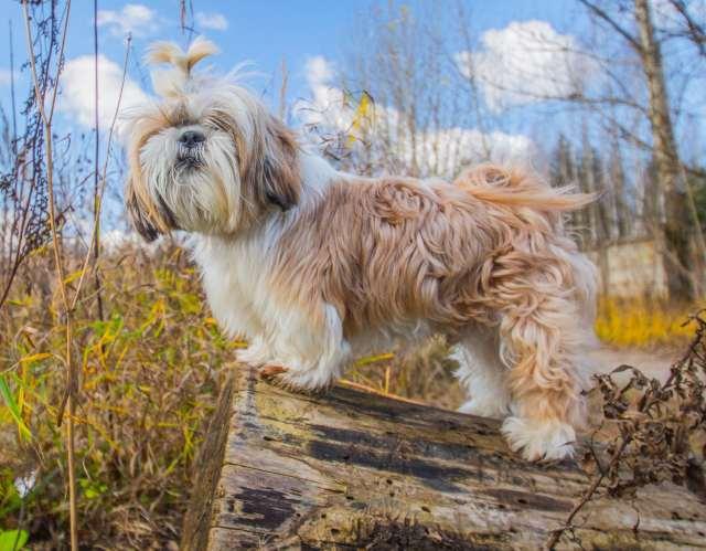 Låt hunden träna balans & kroppskontroll