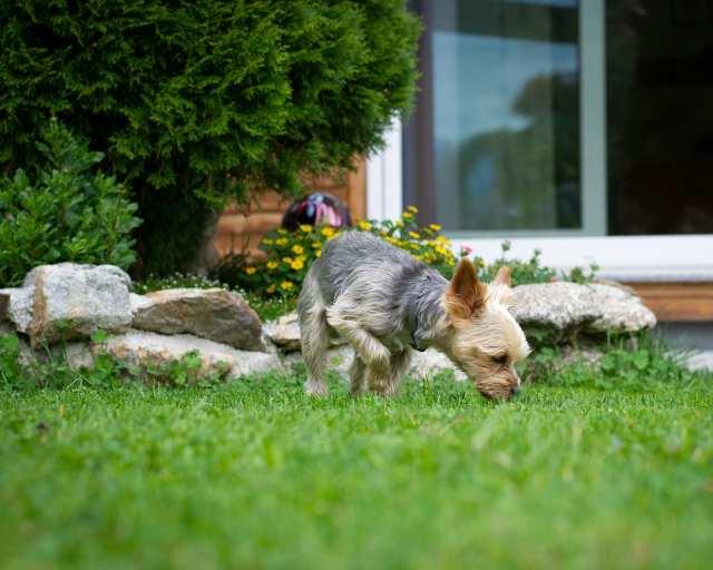 Träningstips – lär din hund att älska att leta godis!