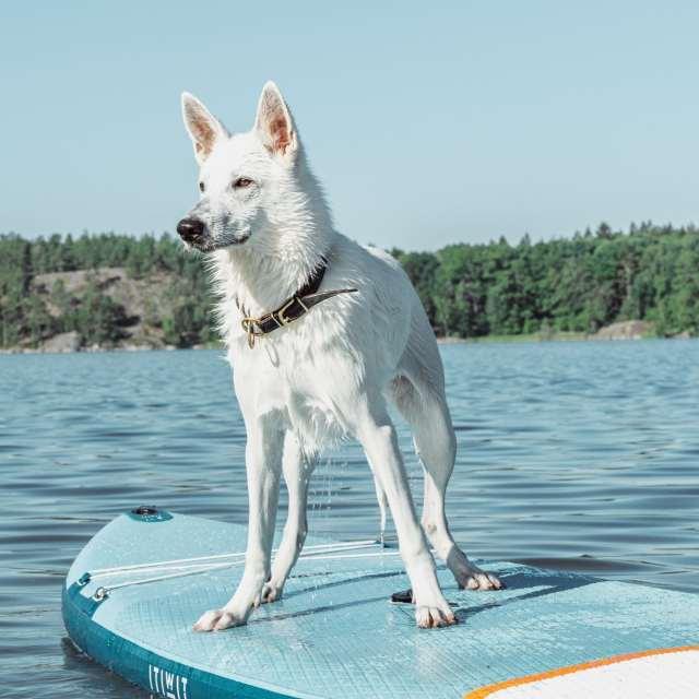 Resa med hund i sommar? 5 tips!