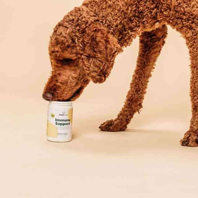 Immune Support – för ett friskt hundliv