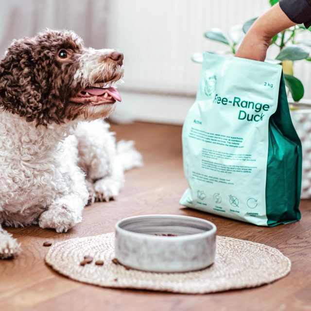 Buddy Pet Foods