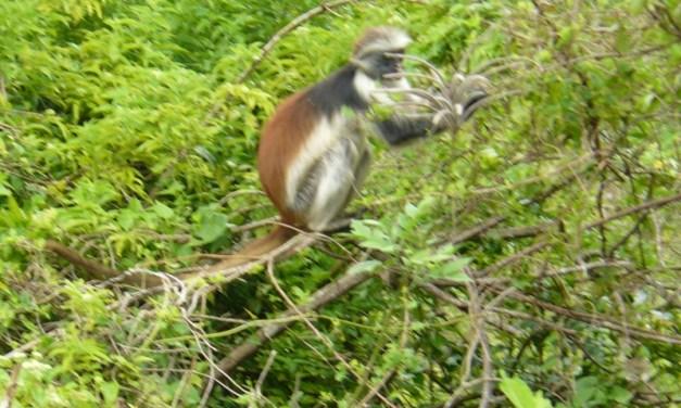 14 Day Safari Serengeti Ngorongoro and Zanzibar