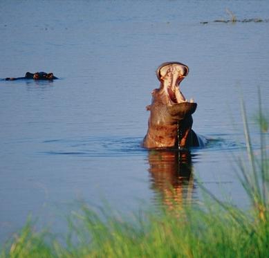9 Day Safari to Mahale and Gombe Stream