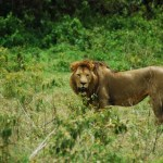 Serengeti, Ngorongoro,Manyara 6 Day Safari