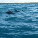 4 Day Safari and Dolphins Tour in Zanzibar