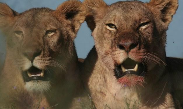 One Day Safari to Ngorongoro Crater