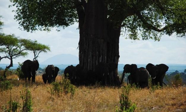 One day Safari to Tarangire National Park