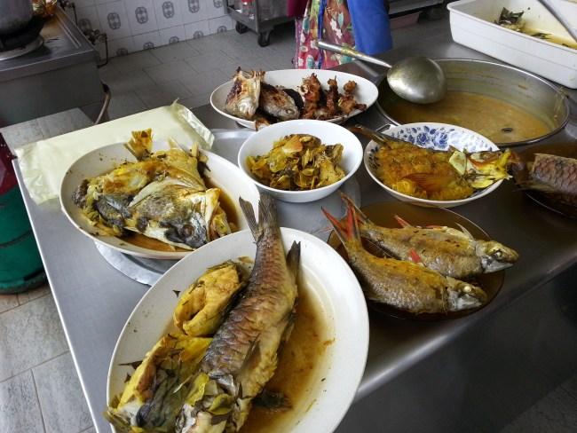 DIFFERENT FISH SPECIES 1