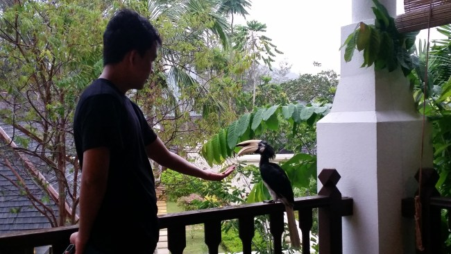HANIF AND A HORNBILL ON OUR VILLA'S VERANDAH