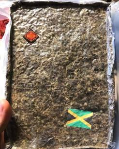 jamaican-brickweed