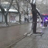 Дърво надвисна над улица, затвориха я (снимки)