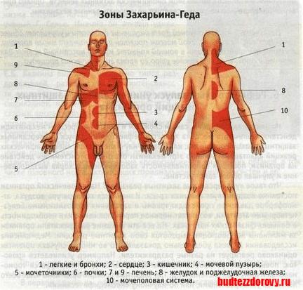 //budtezzdorovy.ru/ игольчатый