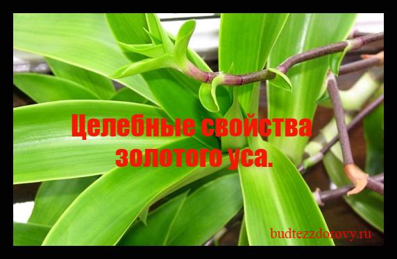 //budtezzdorovy.ru/золотого