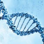 Аминокислоты: их значение для здоровья человека.