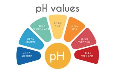Cancer Prevention – How to Check Your pH Balance