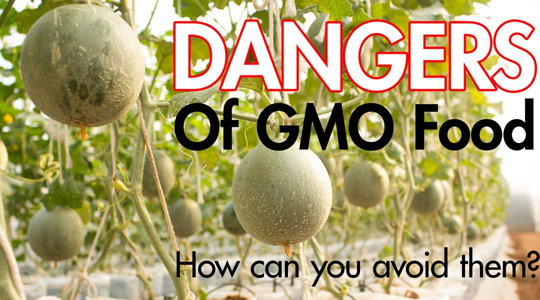 The Dangers of GMO Foods and How You Can Avoid Them